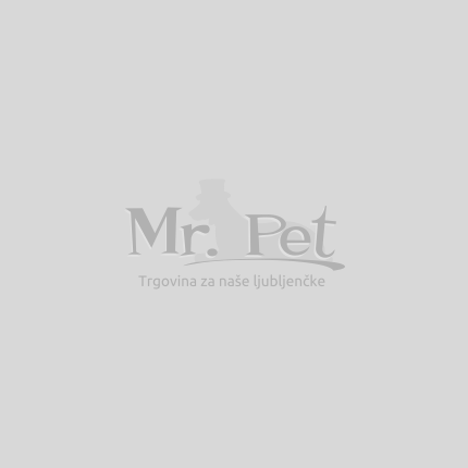 Pasma: Bostonski terier