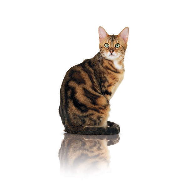 Royal Canin Pure Feline Beauty - raca - 300 g