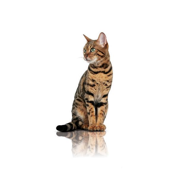 Royal Canin Pure Feline Slimness - perutnina - 300 g