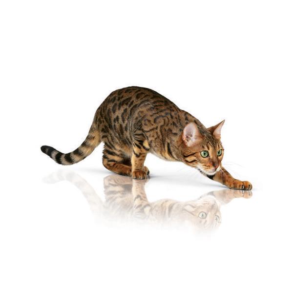 Royal Canin Pure Feline Lively - riba - 300 g