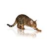 Royal Canin Pure Feline Vitality - 300 g