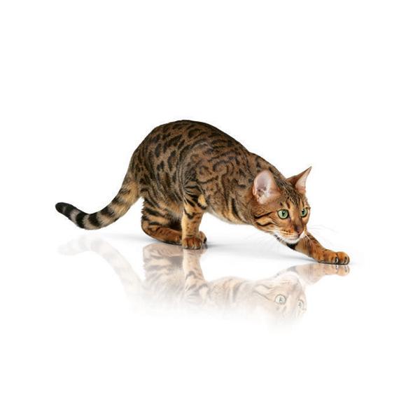 Royal Canin Pure Feline Lively - riba - 1,5 kg
