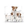 Royal Canin Mini Starter - 1 kg