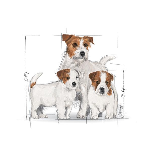 Royal Canin Mini Starter - perutnina - 3 kg