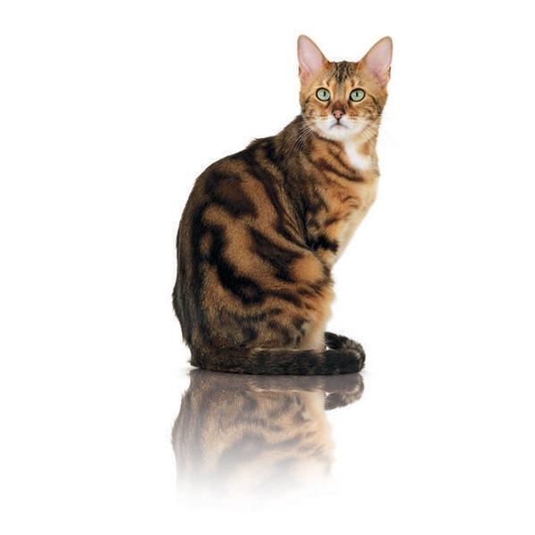 Royal Canin Pure Feline Beauty - raca - 1,5 kg