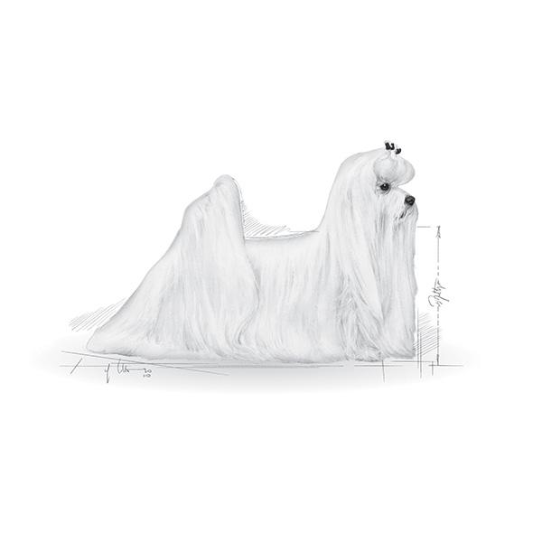 Royal Canin Maltežan - 1,5 kg