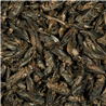 Tropical Crickets - 250 ml / 25 g