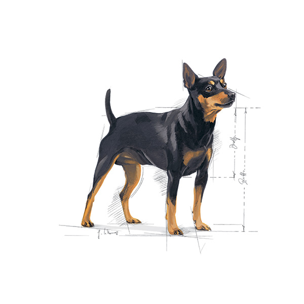 Royal Canin Mini Digestive Care- 800 g