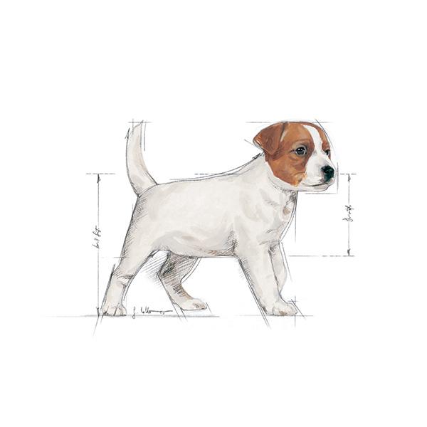 Royal Canin Junior Mini - perutnina - 800 g