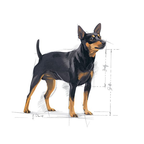 Royal Canin Mini Digestive Care- 4 kg
