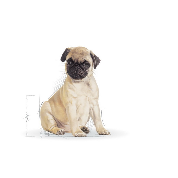 Royal Canin Mops Junior - 1,5 kg