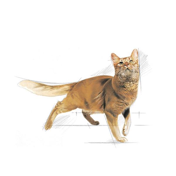 Royal Canine Fit- perutnina - 4 kg