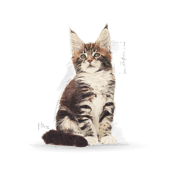 Royal Canin Kitten Maine Coon - perutnina - 2 kg