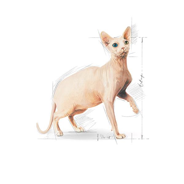 Royal Canin Adult Sfinga - perutnina - 2 kg