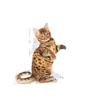 Royal Canin Kitten Sterilised - 400 g