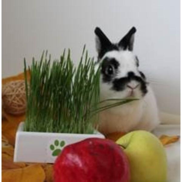 4Pet nadomestna rastna podlaga za vzgojo mačje trave - 3 kom