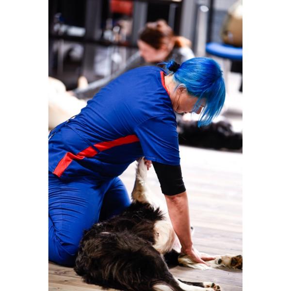 TEČAJ masaže psov - udeležba brez psa - 17. november ob 13h