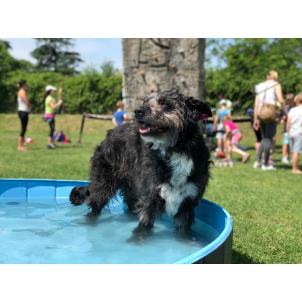 Camon bazen za pse - fi 120 x h 30 cm