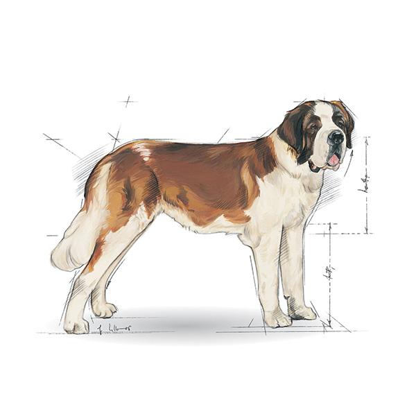 Royal Canin Junior Giant - perutnina - 15 kg