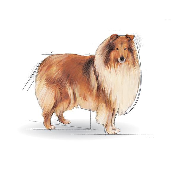 Royal Canin Maxi Light - perutnina - 15 kg