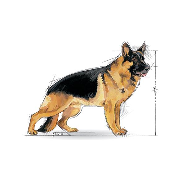 Royal Canin Senior Maxi - perutnina - 15 kg