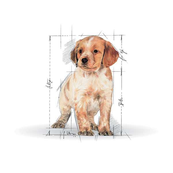 Royal Canin Junior Medium- perutnina - 15 kg