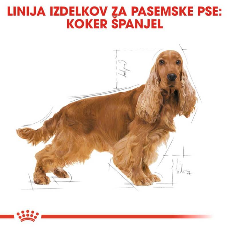 Royal Canin Kokeršpanjel - 3 kg