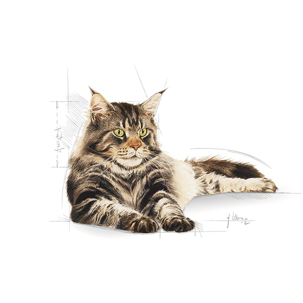 Royal Canin Adult Maine Coon - perutnina - 2 kg
