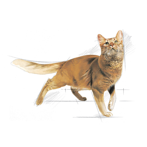 Royal Canine Fit- perutnina - 2 kg