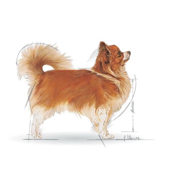 Royal Canin Čivava - 0,5 kg