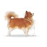 Royal Canin Chihuahua Adult - 0,5 kg