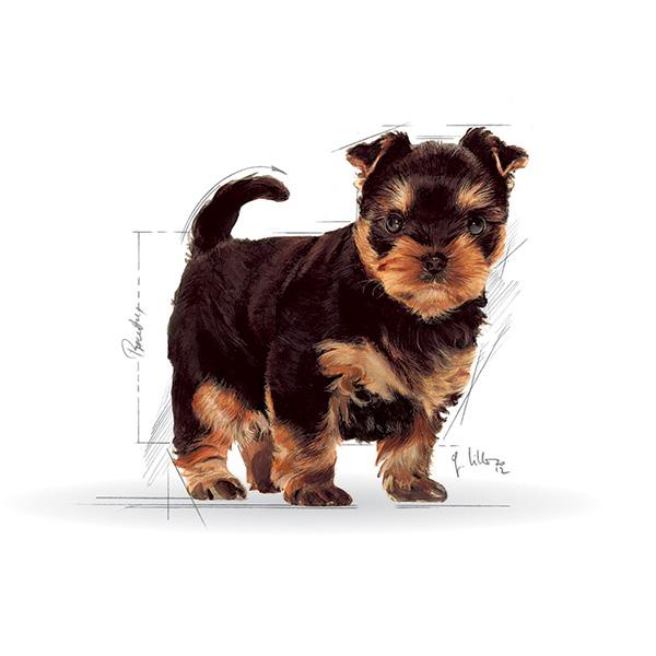 Royal Canin Yorkshirski terier Junior