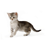 Royal Canin Kitten Instinctive - omaka