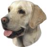 Pasemske nalepke, različne pasme (2 kos) labradorec (svetli)