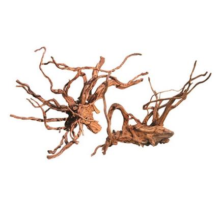 Biom močvirska korenina Redwood mini