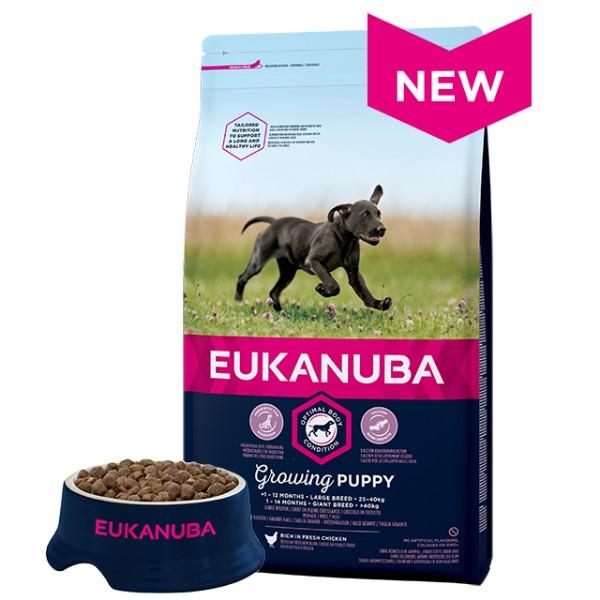 Eukanuba Puppy / Junior Large - piščanec - 15 kg
