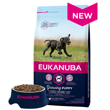 Eukanuba Puppy / Junior Large - piščanec - 15 kg