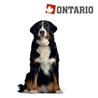 Ontario Adult Large - 7 rib in riž