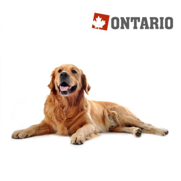 Ontario Adult Large - jagnjetina, puran in riž