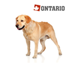 Ontario Adult Large Weight Control - puran in krompir