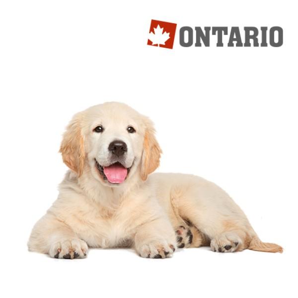 Ontario Puppy & Junior Large - piščanec in krompir