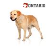 Ontario Senior Large - piščanec in krompir
