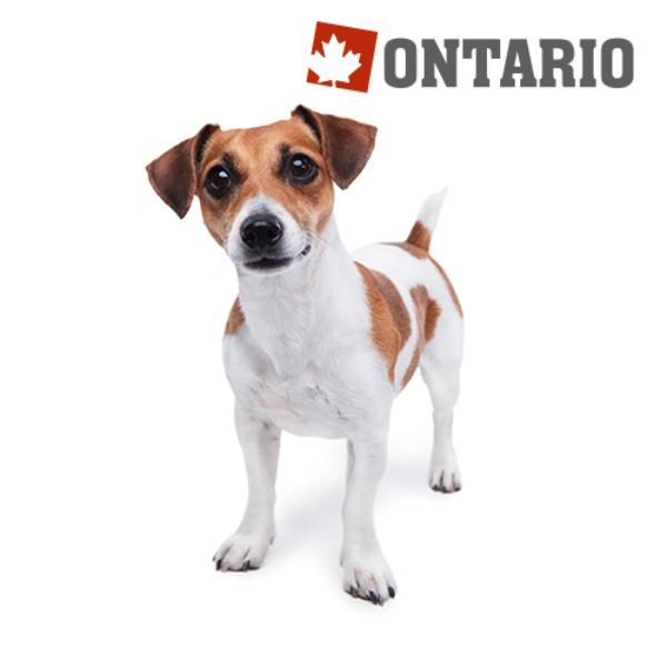 Ontario Adult Mini - 7 rib in riž