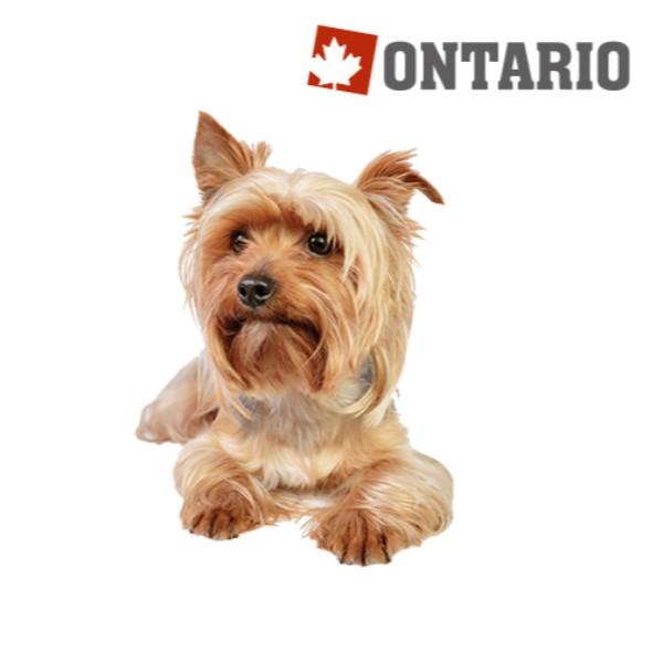 Ontario Adult Mini - jagnjetina in riž