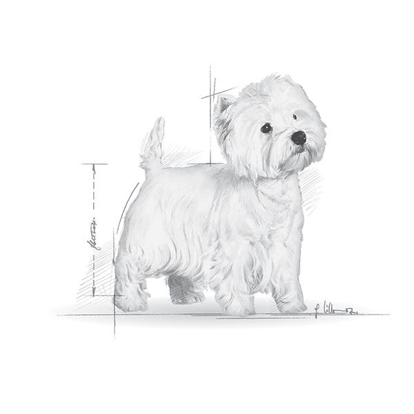 Royal Canin Višavski terier