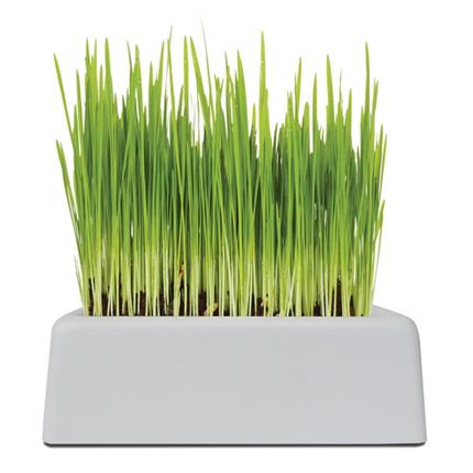 UrbanPet komplet za vzgojo mačje trave