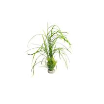 Sydeco dekor Lily Grass Maxi