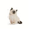 Royal Canin Kitten Instinctive - omaka