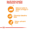 Royal Canin Intense Beauty - omaka