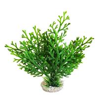Sydeco dekor Microsorum Plant